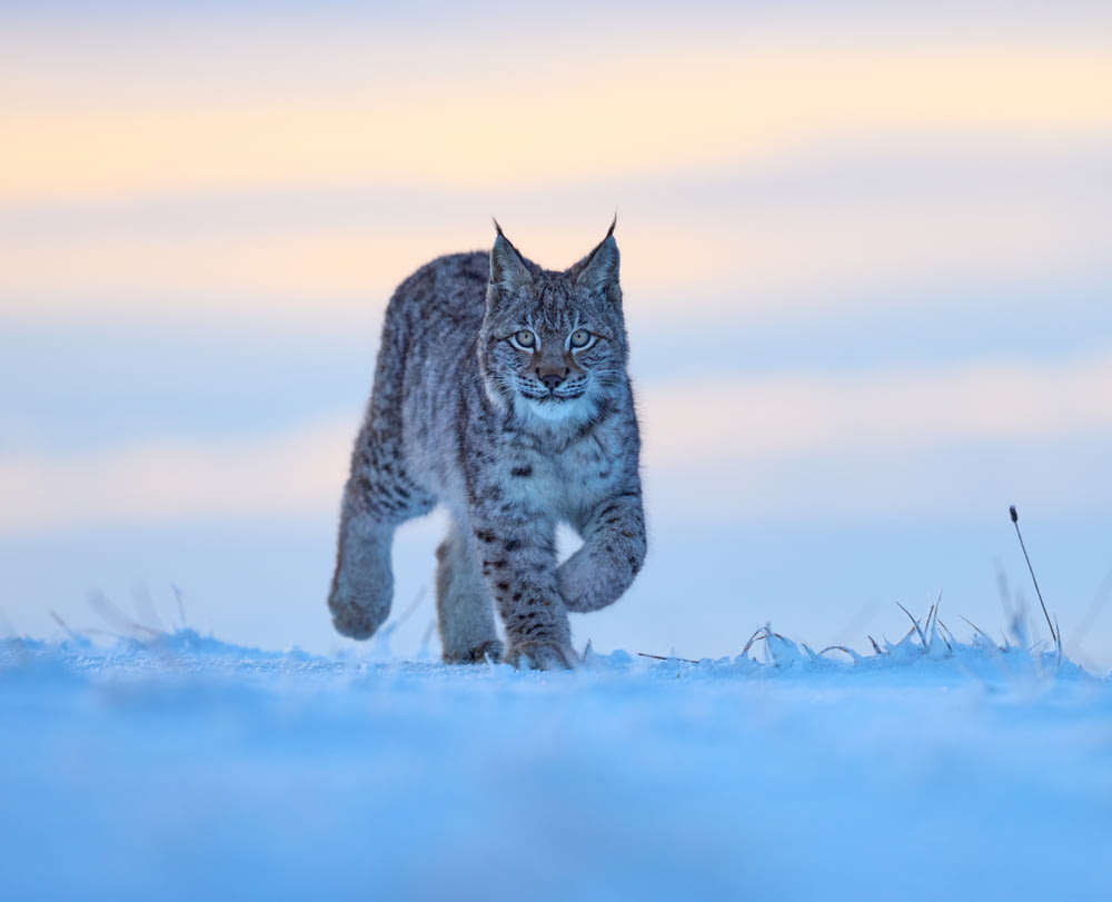 gray cat on snow covered ground