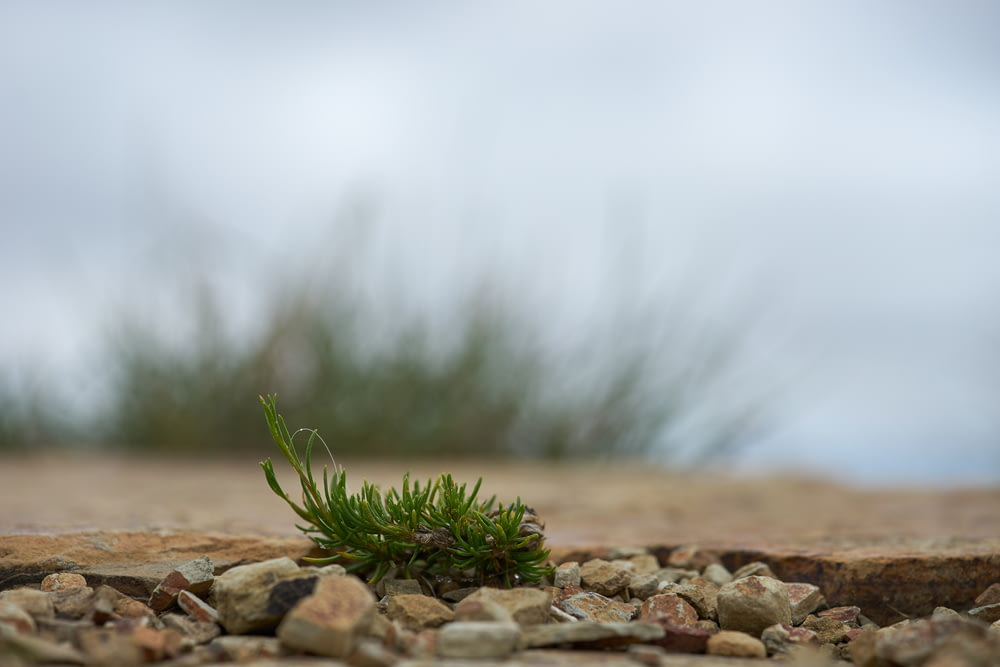 green plant on brown rocky ground