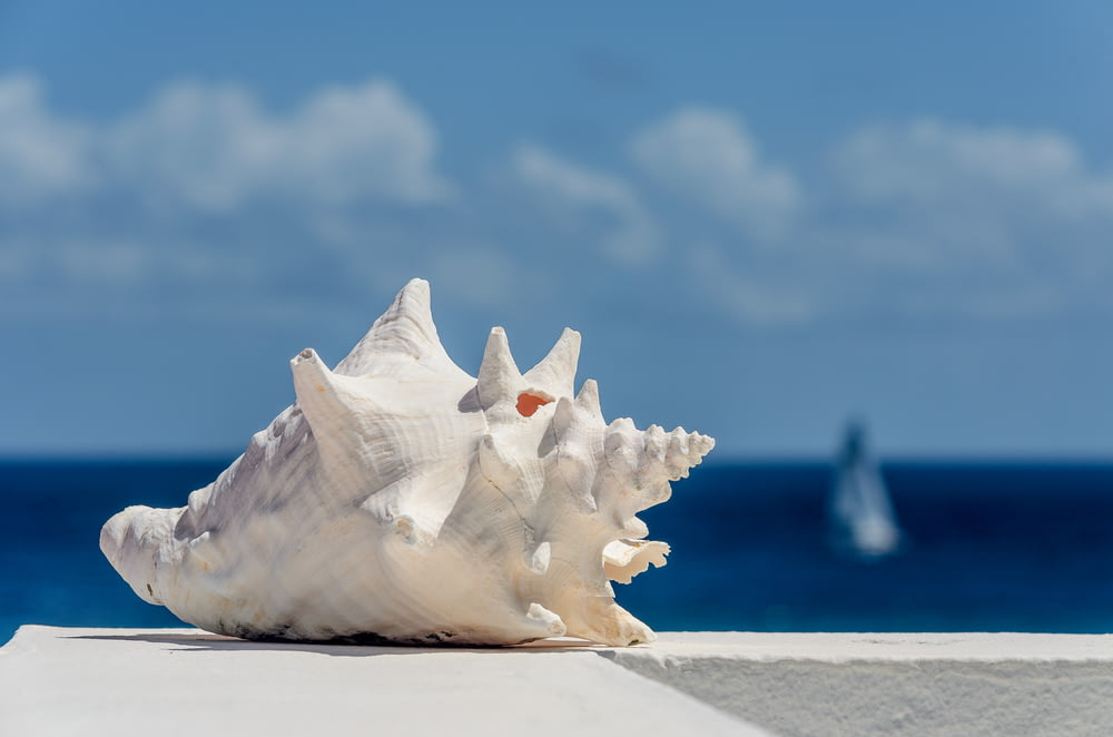 white seashell on white sand during daytime