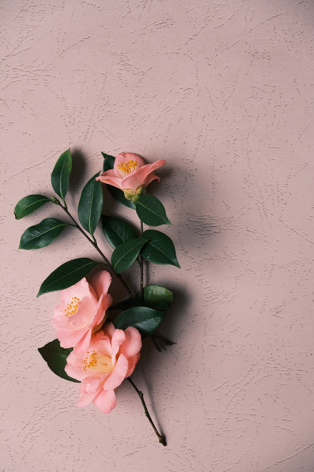 pink and white flower on white wall
