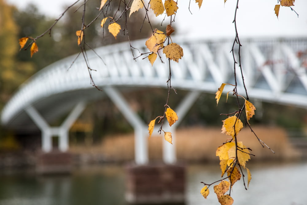 brown leaves on tree branch near body of water during daytime