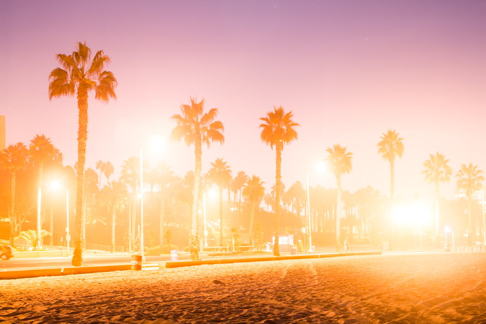 palm trees on the beach during sunset