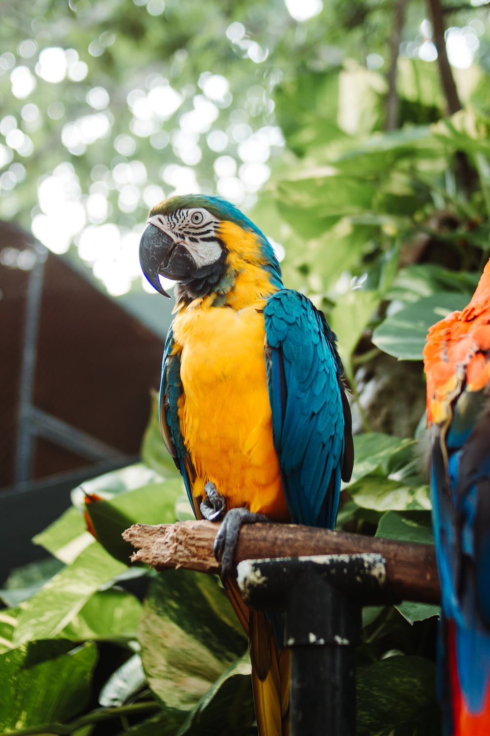 blue yellow and red macaw