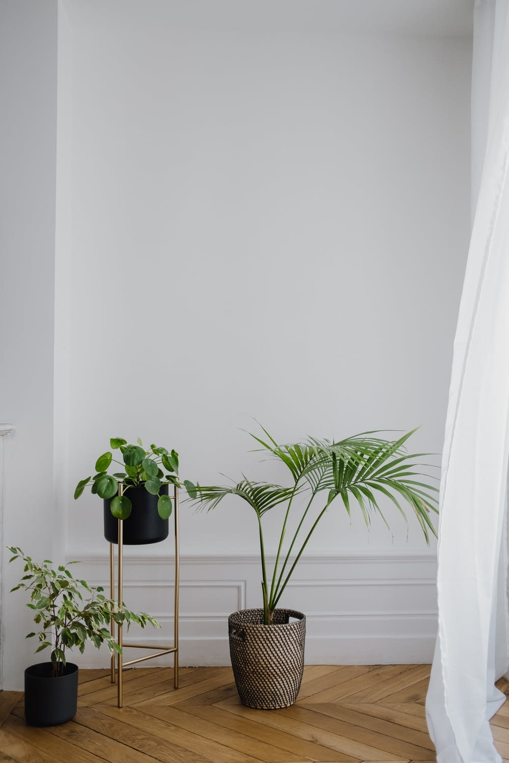green potted plant beside white wall