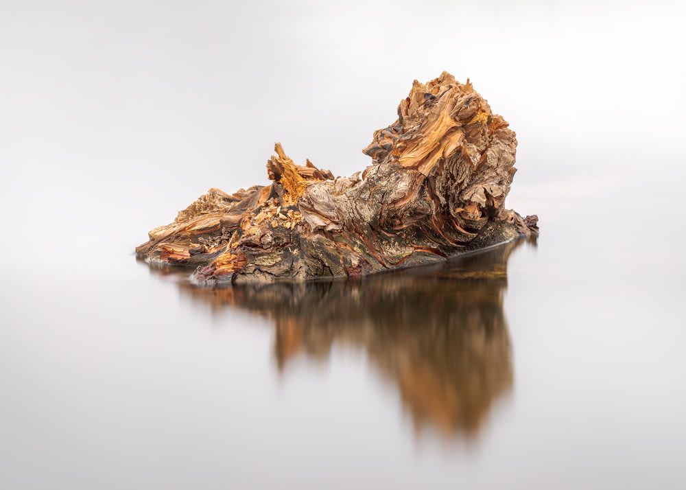 brown tree log on water