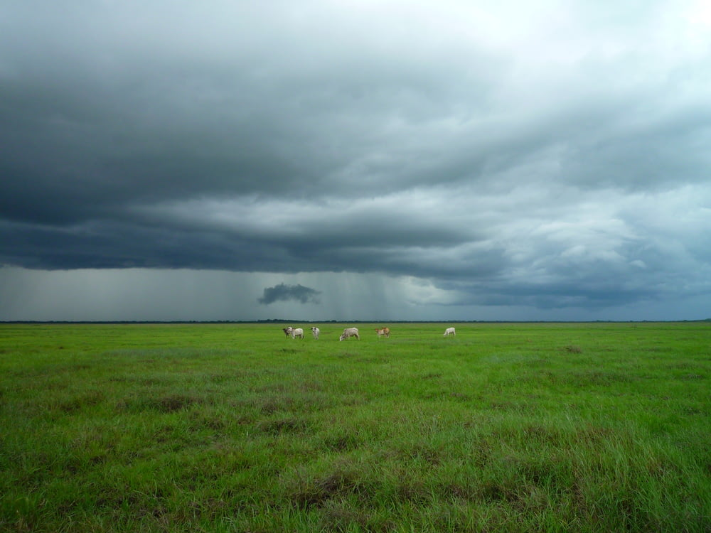 animals on green field under cloudy sky
